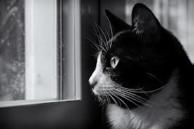 Cat by window