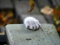 Cat paw hanging