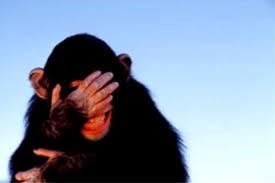 embarrassed monkey
