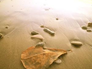 Autumn Beach 1