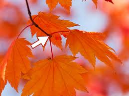 Fall leaves orange