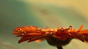 Orange flower Day 2