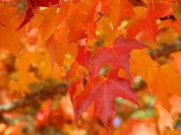 Orange Leaves Day 10