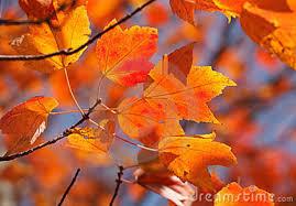 Orange Leaves Day 11
