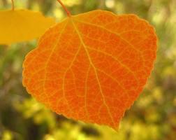 Orange Leaves Day 13