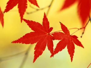 September Leaves 2