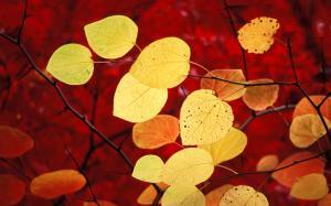 September Leaves 5