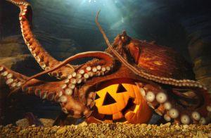 October Octopus