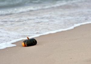 Pumpkin on the Beach 2