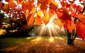 September Leaves 3