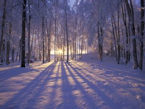 Wintering 1