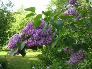 Photo credit leslieland.com
