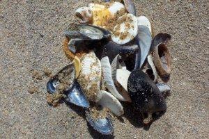 Beach Treasure 1