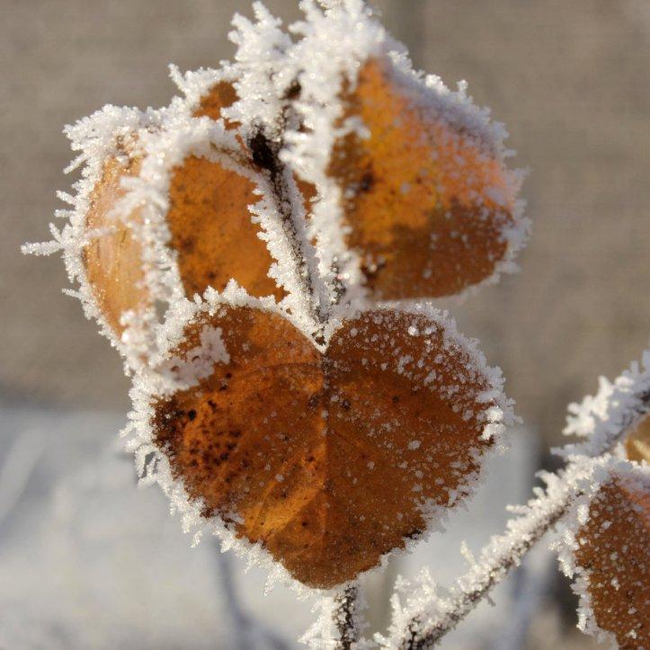 Snow heart 5